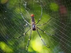 spider-870952_960_720[1]