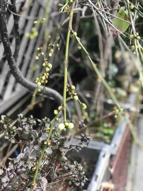 立春は過ぎてもまだまだ寒い日が…春の訪れは?