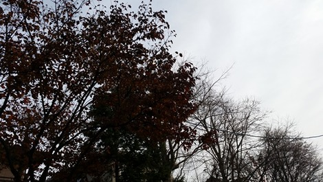 エコ断熱のなる木
