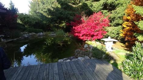 日本庭園? (1)