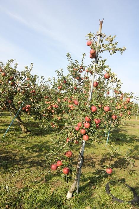 りんご畑の家(7)