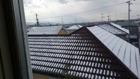 なごり雪(1)