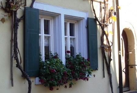 育てる窓辺 (1)
