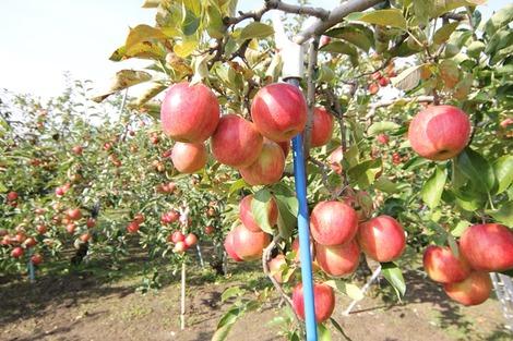 りんご畑の家(4)