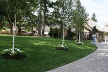 アメリカの家の芝 (2)