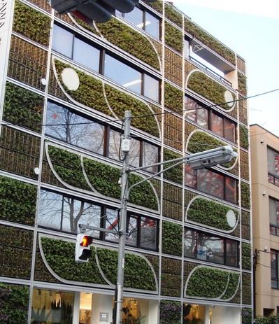 都会の壁面緑化