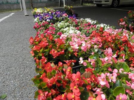 ハンギングの花たち
