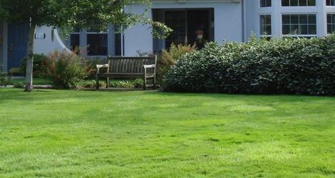 憧れの芝生へ