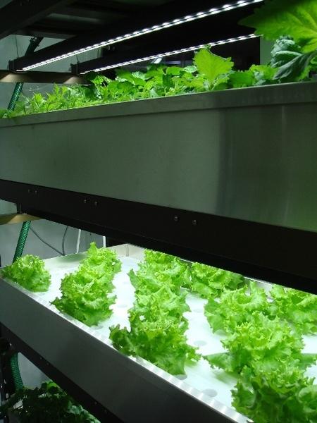 LED照明と野菜づくり