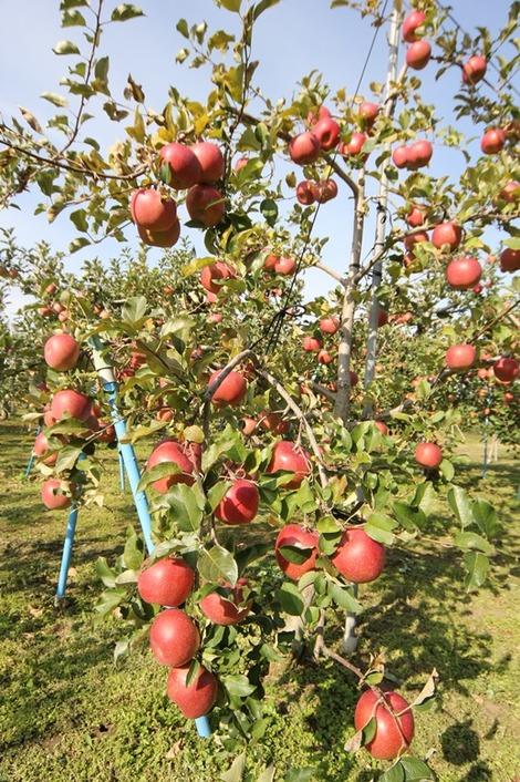 りんご畑の家(6)