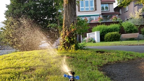 水飲む芝生