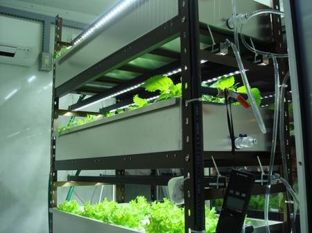 LED照明で野菜づくり