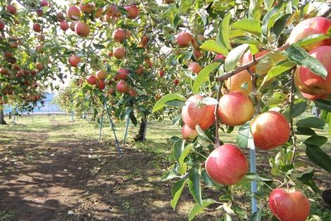 りんご畑の家(3)