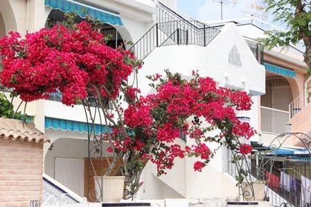 彩のある南欧の家(5)