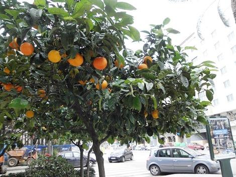 バレンシアオレンジ4