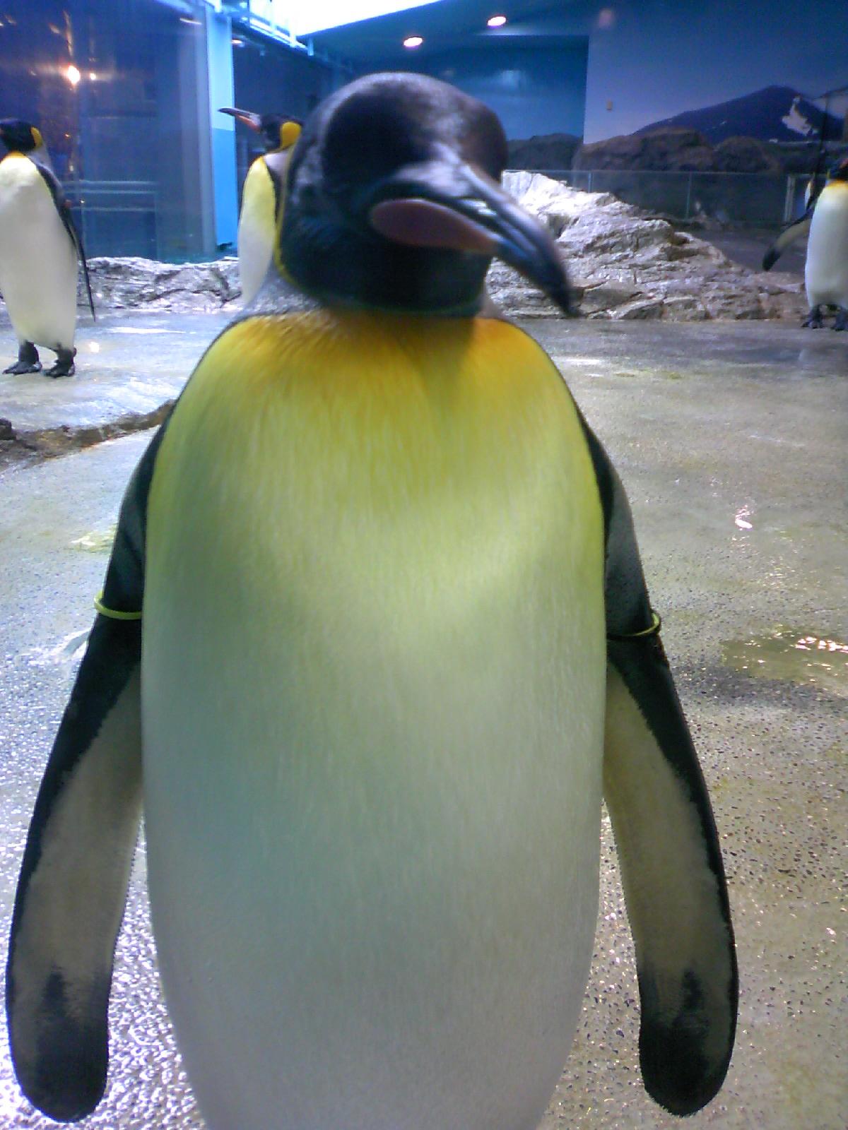 ペンギンの画像 p1_37