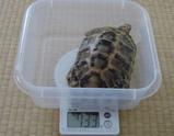 2007年10月の測定