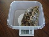 2007年11月の測定