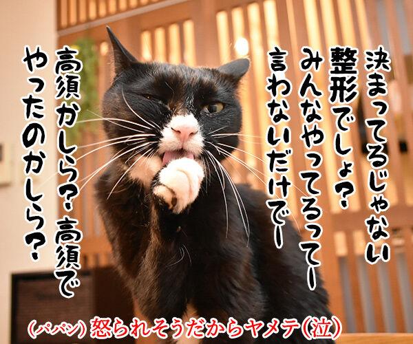 今日は東京ディ〇ニーランドが開園した日なんですってッ 猫の写真で4コマ漫画 4コマ目ッ