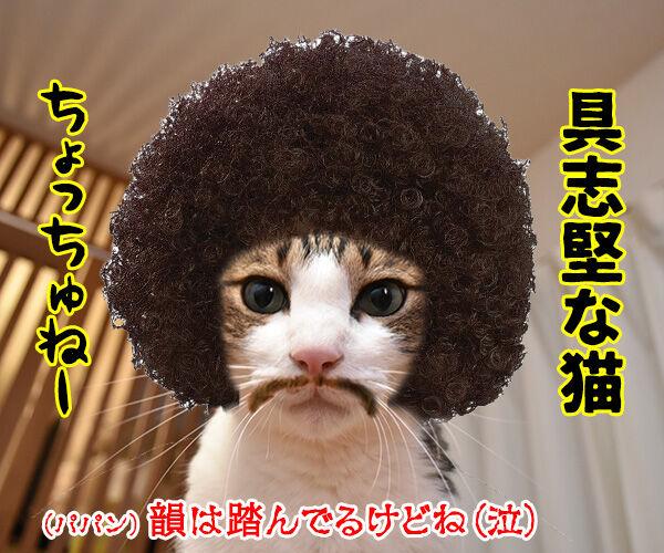 不機嫌な猫『グランピー・キャット』が亡くなったんですってッ 猫の写真で4コマ漫画 4コマ目ッ
