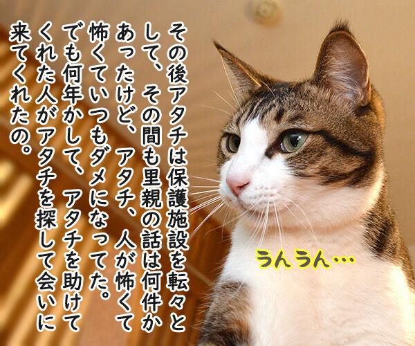 だいずさんとの出会い 猫の写真で4コマ漫画 2コマ目ッ