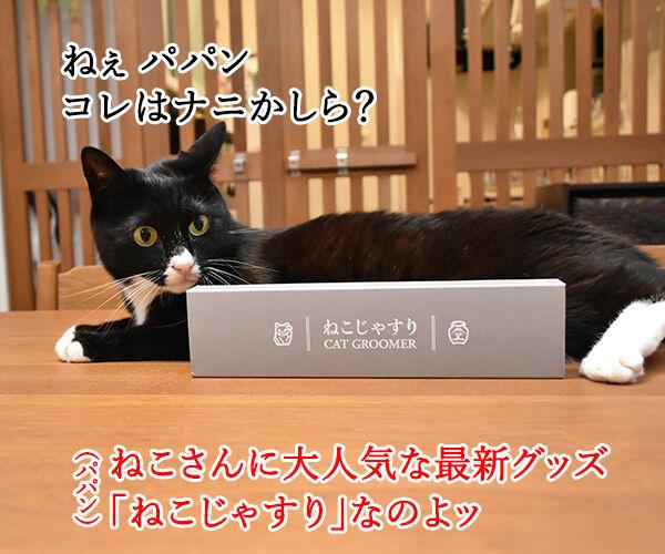 猫さんに大人気の『ねこじゃすり』を買ってみたのッ 猫の写真で4コマ漫画 1コマ目ッ