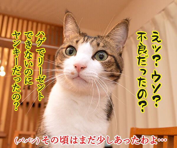 パパンの成人式は…… 猫の写真で4コマ漫画 3コマ目ッ