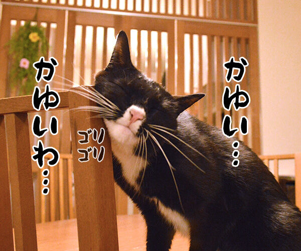 かゆいのよッ 猫の写真で4コマ漫画 1コマ目ッ