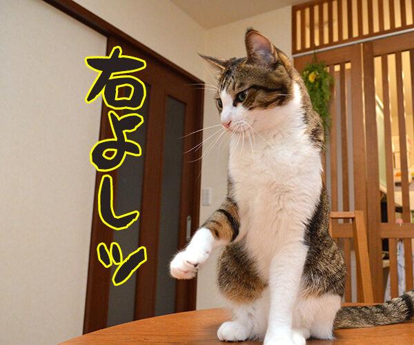 道路を渡るときはちゃんと左右を確認するのよッ 猫の写真で4コマ漫画 2コマ目ッ