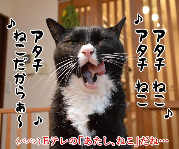 『あたし、ねこ』が変わるってホント? 猫の写真で4コマ漫画 1コマ目ッ