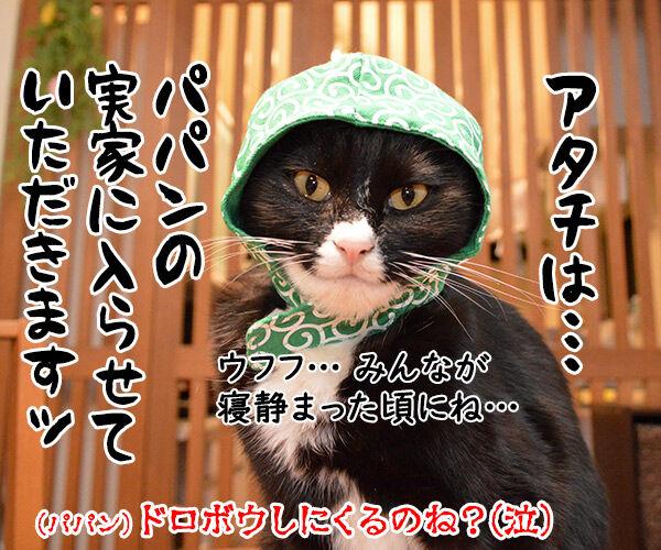 お盆だから実家に帰ろうと思うの 猫の写真で4コマ漫画 4コマ目ッ