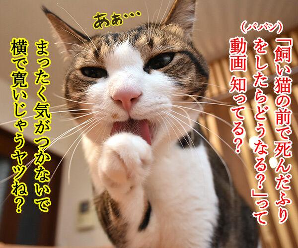 猫さんの前で死んだふりをしたら? 猫の写真で4コマ漫画 1コマ目ッ