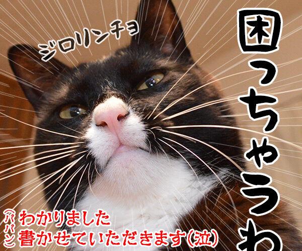 遺言を書く人が増えてるんですってッ 猫の写真で4コマ漫画 4コマ目ッ
