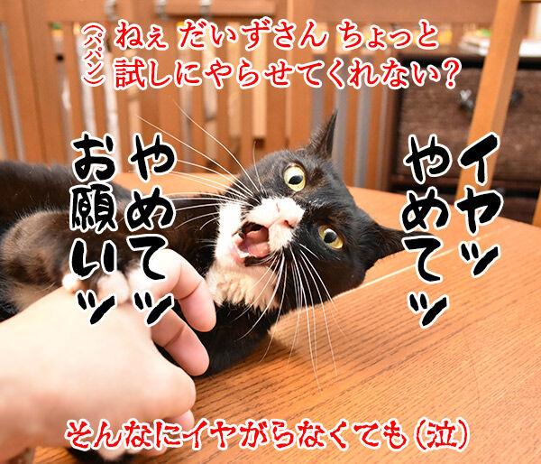 猫さんの上手な抱き上げ方って? 猫の写真で4コマ漫画 3コマ目ッ