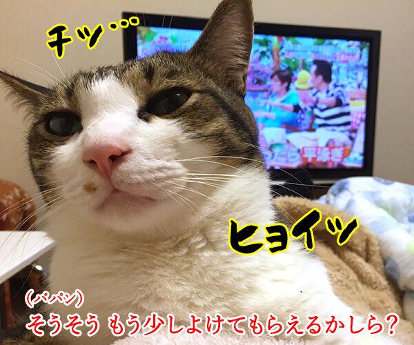 テレビが見えないから 猫の写真で4コマ漫画 2コマ目ッ