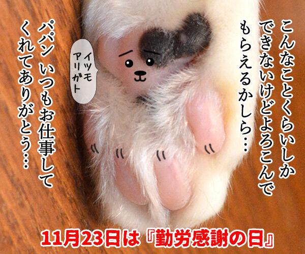 猫の手も借りたいと言うけれど… 其の二 猫の写真で4コマ漫画 4コマ目ッ