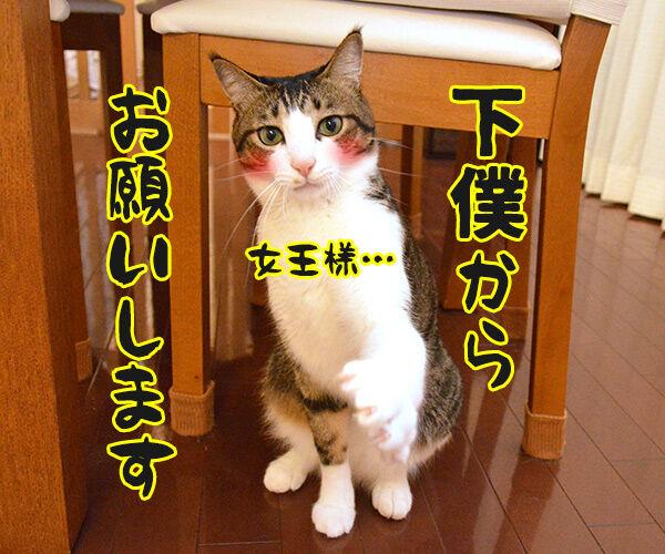 ねるとん 其の一 猫の写真で4コマ漫画 4コマ目ッ