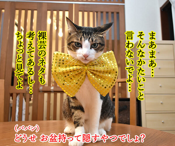 『R-1ぐらんぷり』に出たいのよッ 猫の写真で4コマ漫画 3コマ目ッ