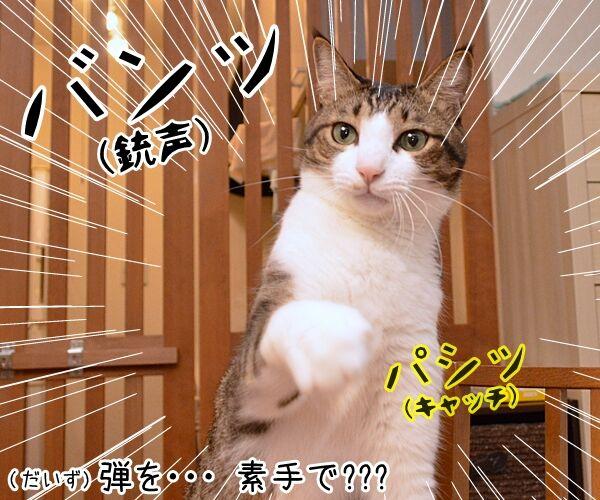 寒くなってきたからアレしなくちゃねッ 猫の写真で4コマ漫画 1コマ目ッ