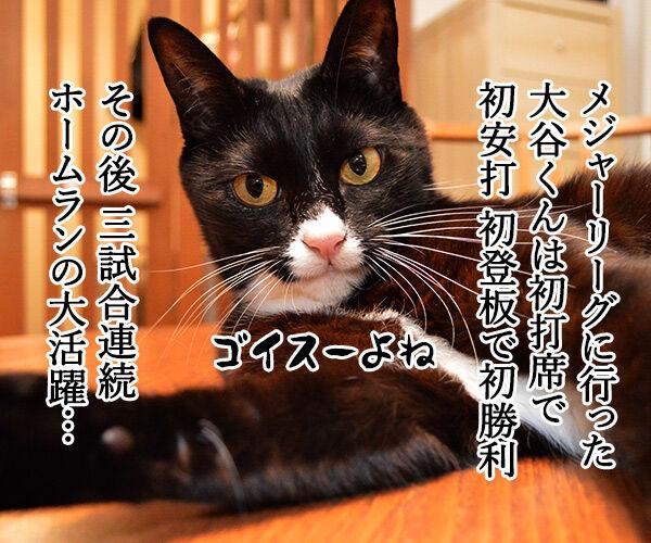 大谷翔平くんて… 猫の写真で4コマ漫画 1コマ目ッ