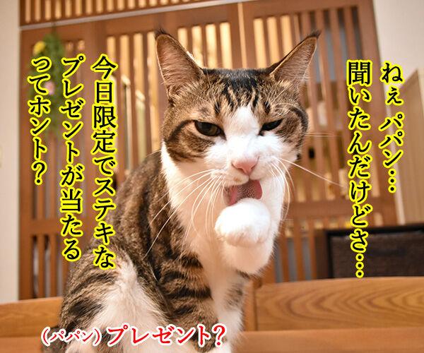 今日限定でステキなプレゼントがもらえる『○○○の日』 猫の写真で4コマ漫画 1コマ目ッ
