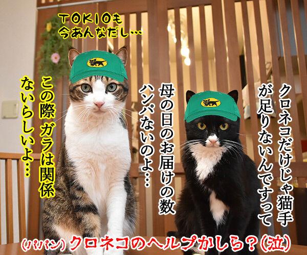 母の日のプレゼントはクロネコヤマトで 猫の写真で4コマ漫画 4コマ目ッ