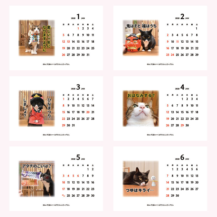 あずだいカレンダー 販売開始デースッ 猫の写真で4コマ漫画 5コマ目ッ