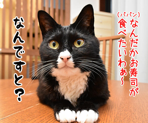 パパン なんだかお寿司が食べたいわぁ~ 猫の写真で4コマ漫画 1コマ目ッ