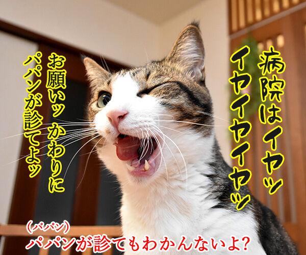 目がゴロゴロしてるのよッ 猫の写真で4コマ漫画 3コマ目ッ