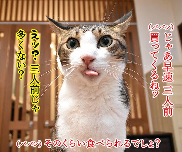 スシローで『大とろ祭』が開催中なのよッ 猫の写真で4コマ漫画 3コマ目ッ