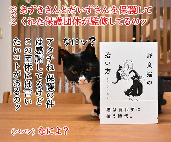 『野良猫の拾い方』って本を買ったのよッ 猫の写真で4コマ漫画 3コマ目ッ
