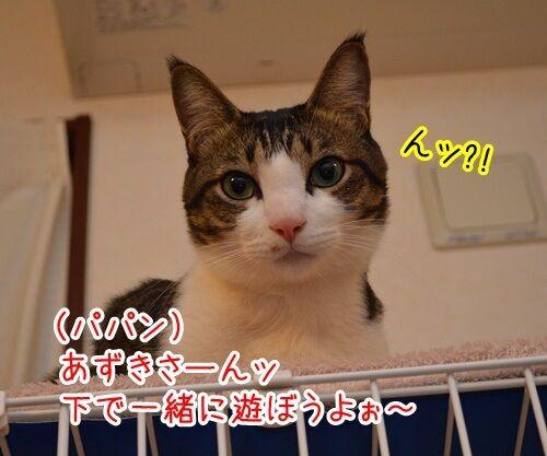 こっちにおいで 猫の写真で4コマ漫画 1コマ目ッ