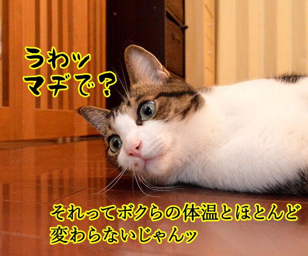 各地で猛暑なんですってッ 猫の写真で4コマ漫画 2コマ目ッ
