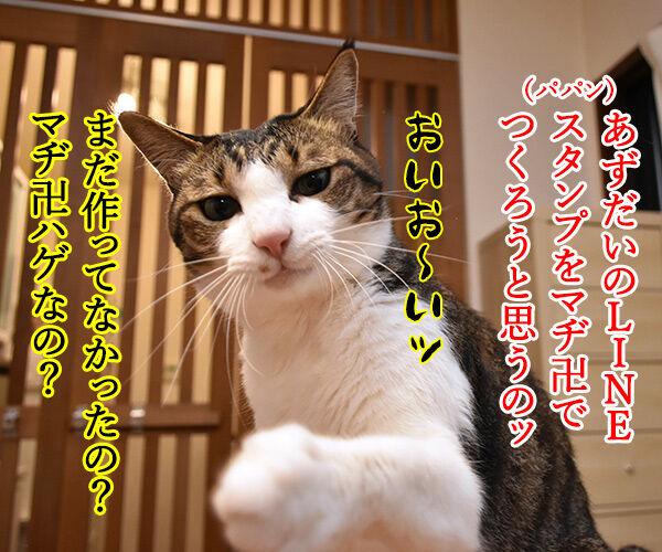 あずだいのLINEスタンプを作ってるのッ 猫の写真で4コマ漫画 1コマ目ッ